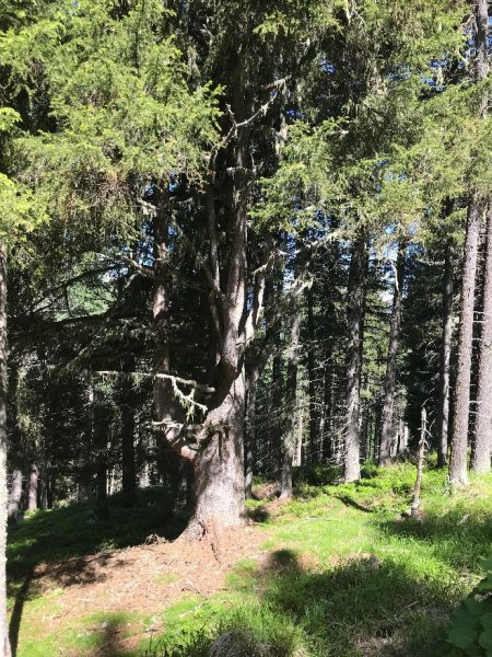 Wandertipp: Die Knappenwegtour zum Knappenhaus