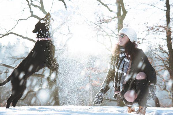 hund im schnee pexels-daniel-frank-313104