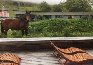 Pferde auf der Terrasse